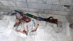 کشف لاشه یک رأس قوچ وحشی در شهرستان سربیشه