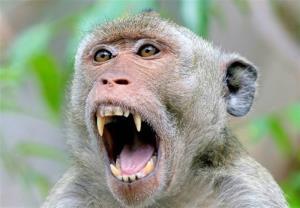 میمون راهزن دیده بودین؟!