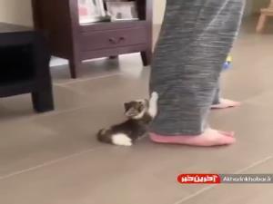 بازی گوشی بچه گربه