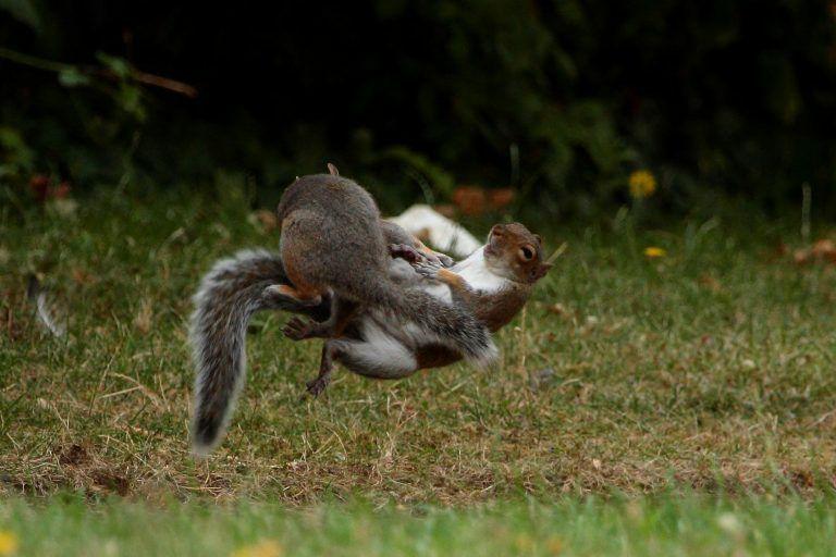تصاویری بامزه از سنجابهای نینجا