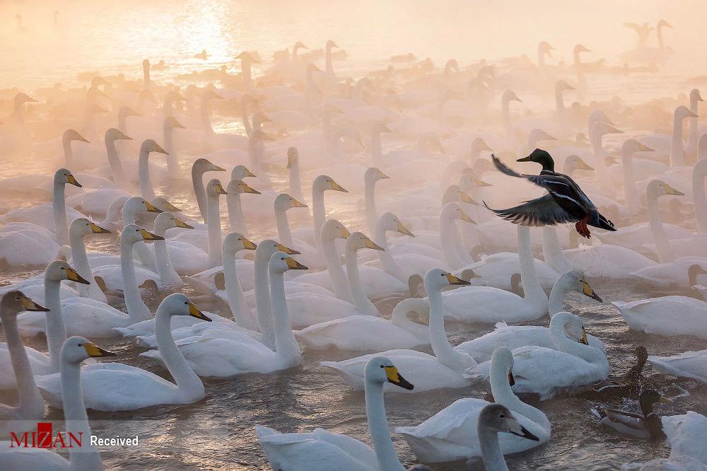 تصاویری سحرانگیز از مسابقه عکاسی (روسیه، زیباترین کشور)