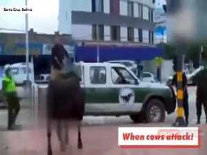حمله گاوها به مردم در سطح شهر!