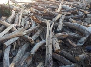 پرونده قطع درختان ارس مانهوسملقان خراسان شمالی قضایی شد
