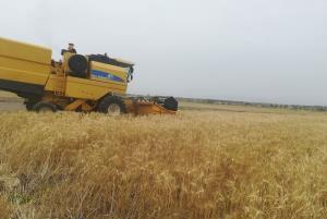 ۱۶۰۰ تن گندم در خراسان جنوبی خریداری شد
