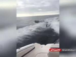 تعقیب پرسرعت قایق کوچک توسط چند نهنگ قاتل