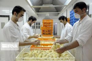 میزان جوجهریزی در واحدهای مرغداری لرستان ۱۲ درصد افزایش یافت