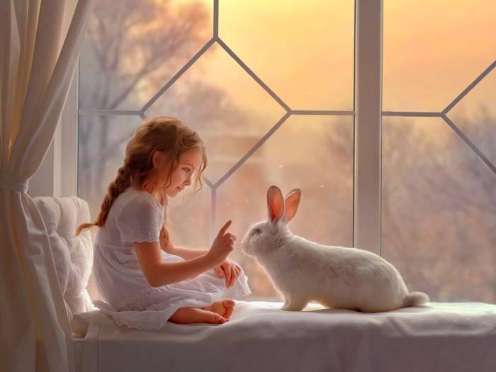 باید و نبایدهای نگهداری خرگوش در خانه