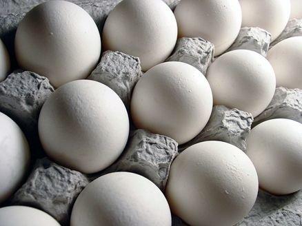صادرات تخم مرغ ممنوع نیست