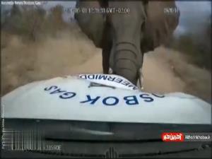 حمله فیل به یک خودرو