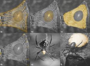 ساخت مواد جدید با الهام از تار عنکبوت