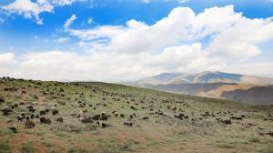 خشکسالی ۴۰ درصد علوفه مراتع اردبیل را از بین برد
