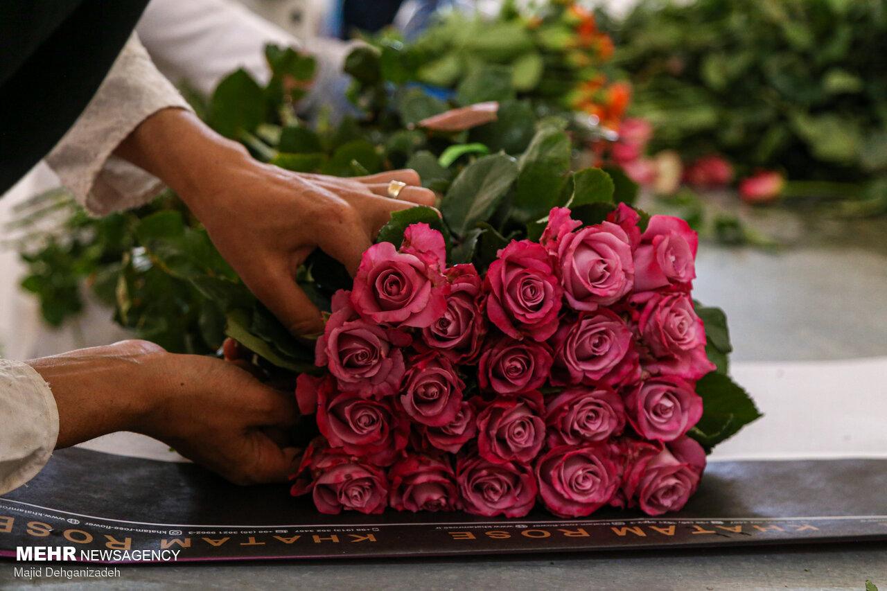 عکس/ پرورش گل یک جوان یزدی در کویر