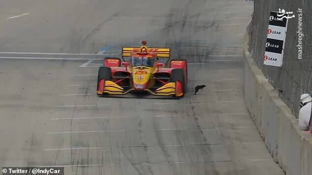 فرار سنجاب از مقابل خودرویی در پیست مسابقه
