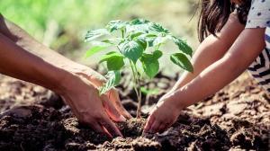 آشنایی با روش «باغبانی درمانی» برای تقویت سلامت روان خانواده
