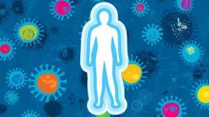 تاثیر بافت چربی بر سیستم ایمنی بدن