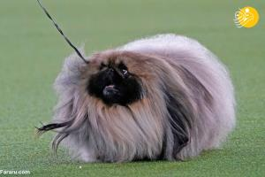 این سگ عجیب و غریب را ببینید!