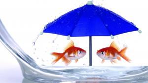 ماهیگیری با چتر