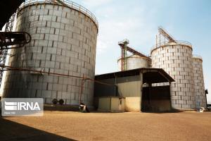 ۸۰۰ تن گندم مازاد از کشاورزان خراسان شمالی خریداری شد