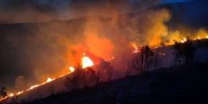 آتشسوزی در خانمیرزا به ۴ هکتار از جنگلهای بلوط خسارت زد