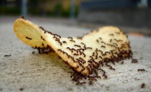 ۷ ترفند خانگی برای فراری دادن مورچه از خانه