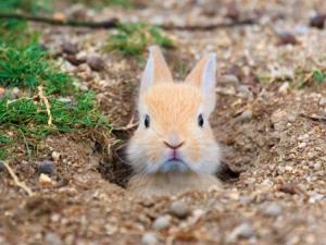 داستانک/ پایان نامه خرگوش