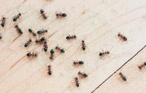 کم کم مورچه ها هم دارن به ارتباطات سریع روی میارن!