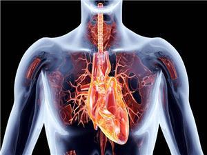 آیا قلب توانایی ایجاد میدان مغناطیسی دارد؟