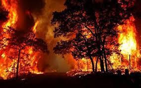جنگلهای زاگرس ۶ روز در آتش میسوزد