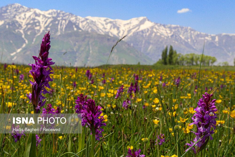 طبیعت زیبای منطقه پیچهبن الموت