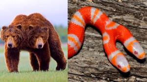 حیوانات دو سر، پدیدهای نادر در حیات وحش!
