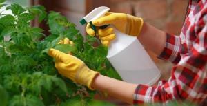 6 دلیل حمله حشرات به خانه شما