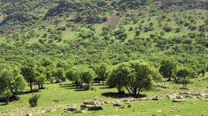 کاهش ۴۰ درصدی تولید علوفه در عرصههای منابع طبیعی خراسان شمالی