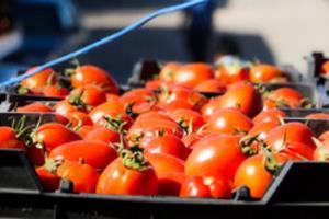 ۵۰ هزار تن محصول کشاورزی از جلفا صادر شد