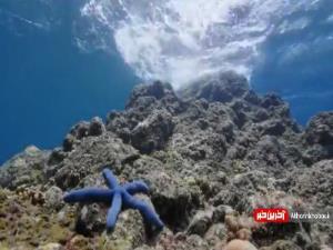 گشتی در میان صخره های مرجانی
