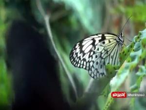 گشتی در دنیای پروانه ها