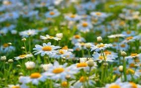 ظهرتون پرز گل 💋