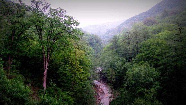 آخرین وضعیت مالکیت جنگل آقمشهد ساری