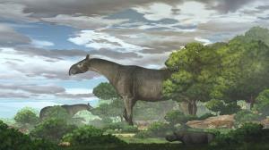 کشف بقایای کرگدن عظیمی که ۲۶ میلیون سال قبل میزیست