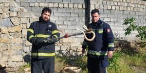 زندهگیری ۳۵ حلقه مار در نقاط مختلف توسط آتشنشانان سنندجی