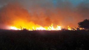 آتشسوزی میانکاله مهار شد