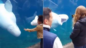 عکس العمل جالب نهنگ با دیدن نهنگ اسباب بازی یک کودک!
