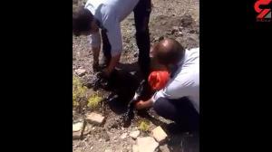 لحظه نجاتدادن سگ غرقشده در قیر