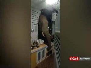 ورود فیل گرسنه به آشپزخانه با خراب کردن دیوار