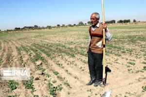 خشکسالی ۸۳۰ میلیارد ریال به محصولات کشاورزی رازوجرگلان خسارت زد