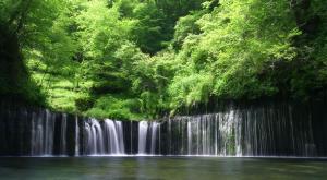 معروف ترین جنگلهای بارانی جهان
