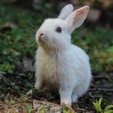 خرگوش هایی که احساس خطر کرده اند!