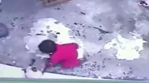 واکنش باورنکردنی گربه و نجات کودک از خطر سقوط!