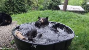 حمام کردن و آب بازی یک خرس