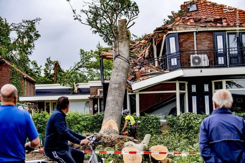 سقوط درختان بر روی خانهها در هلند