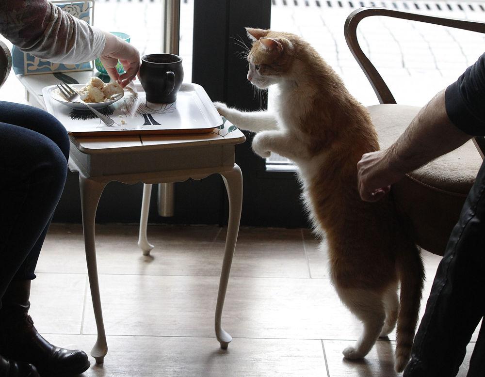 نوشیدن چای و قهوه همراه حیوانات